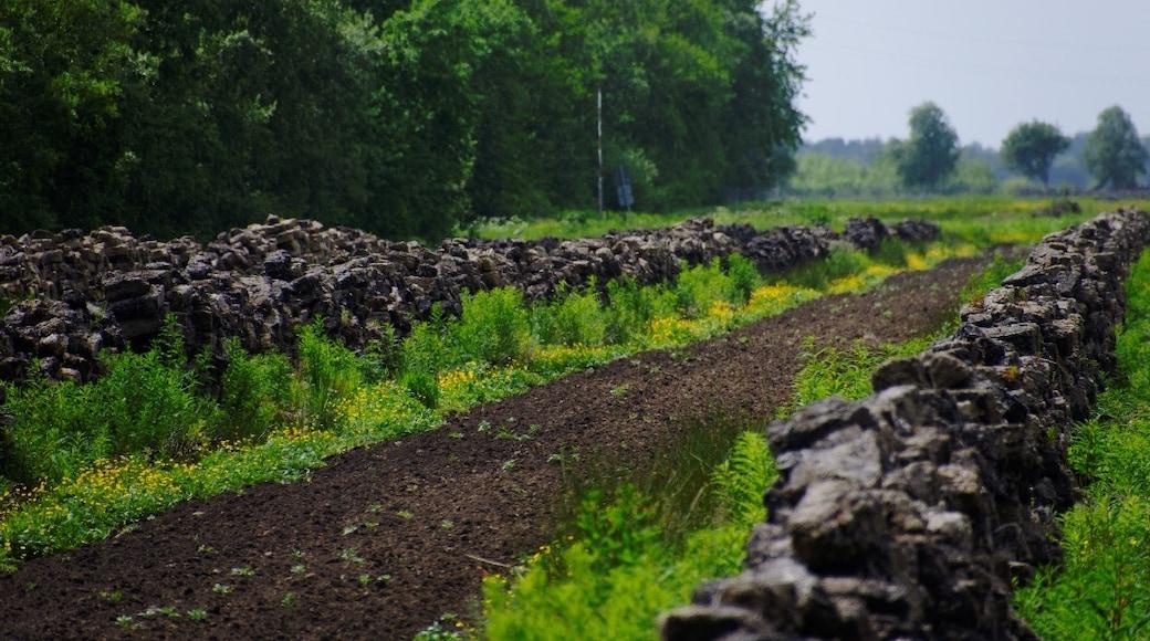 """""""Altes Land""""-foto av Ra Boe / Wikipedia (CC BY-SA) / Urklipp från original"""