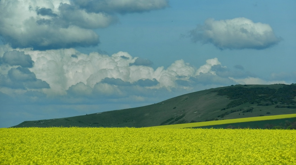 """Photo """"Peacehaven"""" by Tanya Dedyukhina (CC BY) / Cropped from original"""