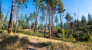 Parc provincial Myra-Bellevue