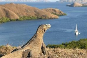 Visit Komodo Dragons & Cunca Wulang