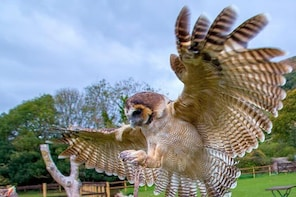 Fly Back to Nature with our Amazing Owls