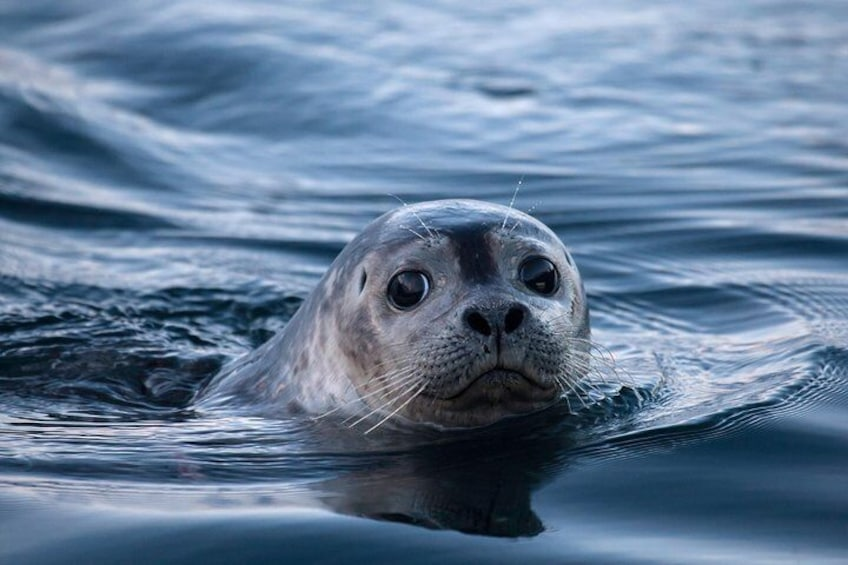 Show item 4 of 7. One of our many seal friends