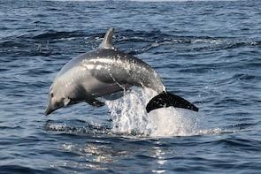 Observacion En Delfines,tortugas Y Más