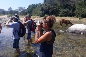 Horses And Hot Springs