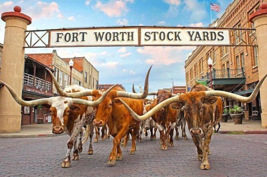 The Fort Worth Herd, Fort Worth Stockyards