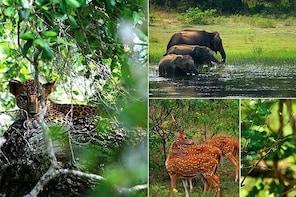 Explore Yala National Park with Best Tour Company Srilanka .