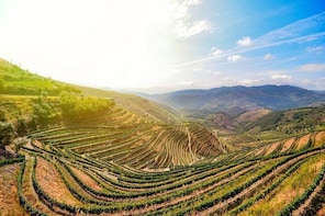 My Douro - Full Day, Wine Tasting, River Cruise and Lunch from Peso da Regu...