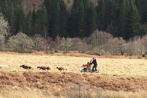 Sleigh dog rides