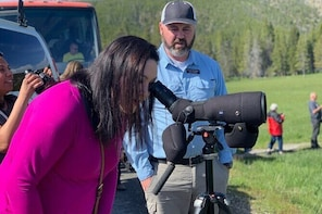 Private Yellowstone Wildlife Sightseeing Tour