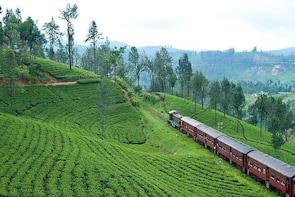 Kandy To Nuwaraeliya Scenic Train Ride and Nuwaraeliya City Tour And Drop E...