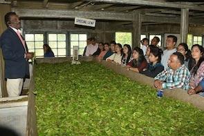 Skip the Line: Munnar Tea Factory Visit Ticket