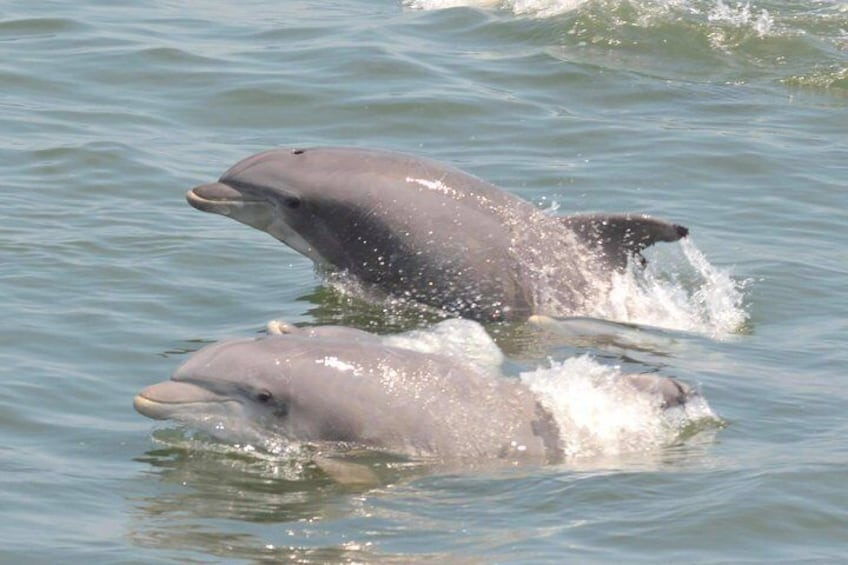 Whale and Dolphin Watching Cruise from Cape May