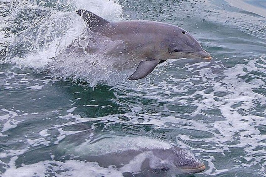 Dolphins behind the boat
