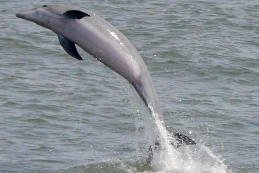 Dolphin Watching around Cape May