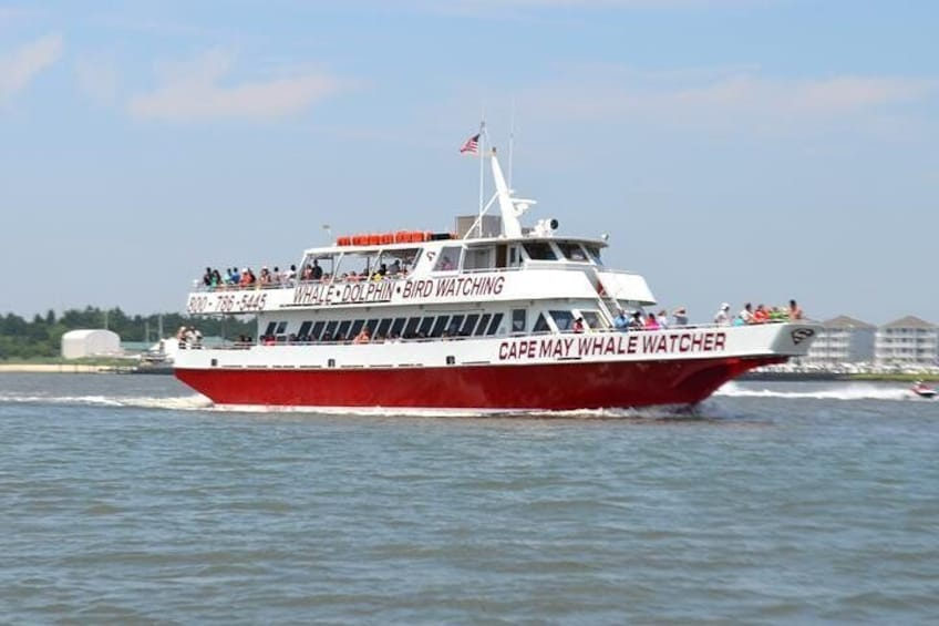 Dinner Cruise with Dolphin and Whale Watching from Cape May