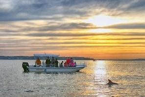 Dolphin & Nature Sunset Cruise