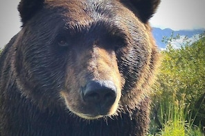 Wilderness, Wildlife, Glacier Experience from Anchorage