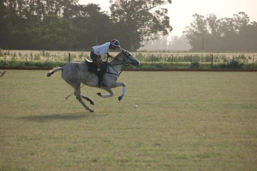 Show item 1 of 9. Horse & Polo Trip in Mar del Plata, Argentina