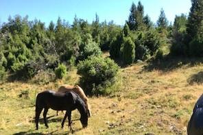 Horseback Riding in Lolog Lake, Neuquén, Argentina