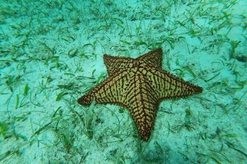 Show item 2 of 11. Antilla Shipwreck Seabob Tour