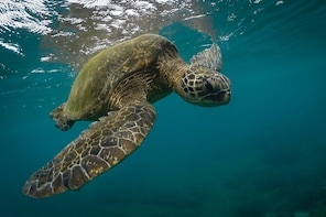 Snorkelling with Sea Turtles in Mirissa