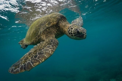 Snorkeling with Sea Turtles in Mirissa