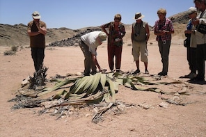Welwitschia Tour from Swakopmund