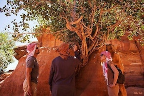 Wadi Rum 2, 3, 4 or 5 hour Jeep Tours with Bedouin Guide