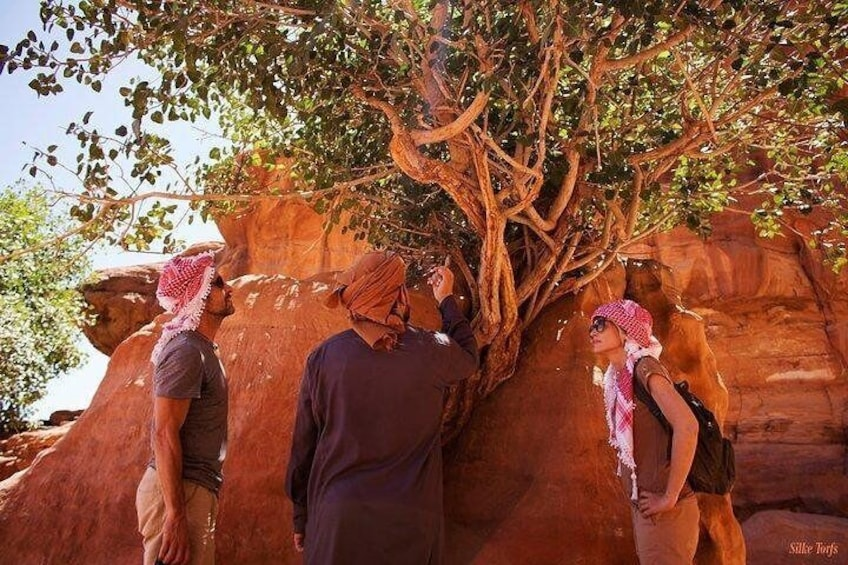 Show item 4 of 8. Wadi Rum 2, 3, 4 or 5 hour Jeep Tours with Bedouin Guide