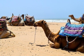 Camel Ride on the Beach of Essaouira