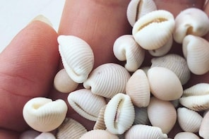 2 Hour Groatie Buckie Walk near John O'Groats - find lucky shells with a lo...