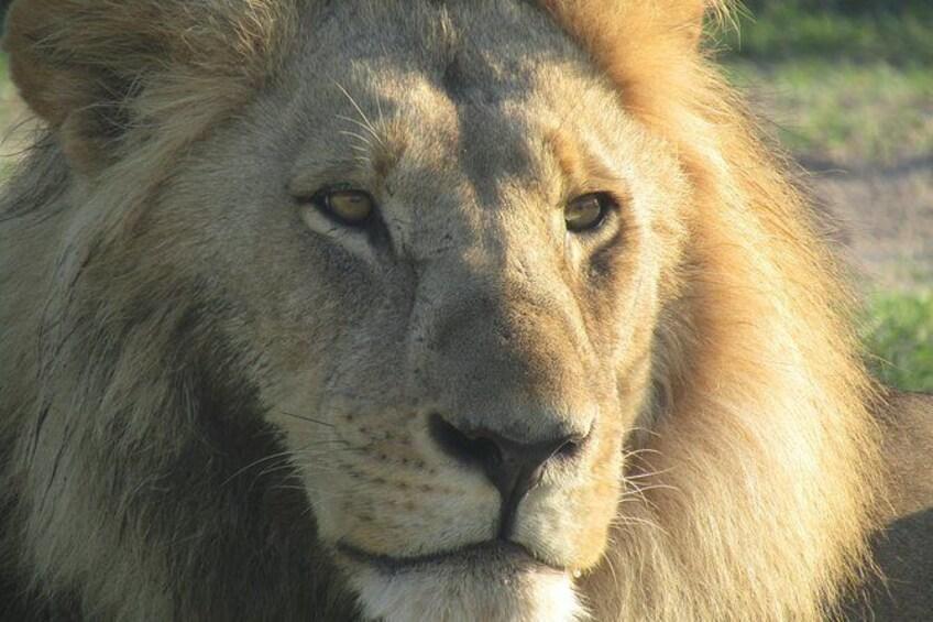 Show item 4 of 14. Chobe Safari Game Drive: Full Day