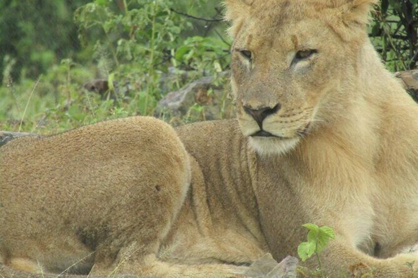 Show item 2 of 14. Chobe Safari Game Drive: Full Day
