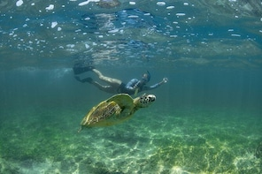 Snorkelling with Turtles in Polhena Reef