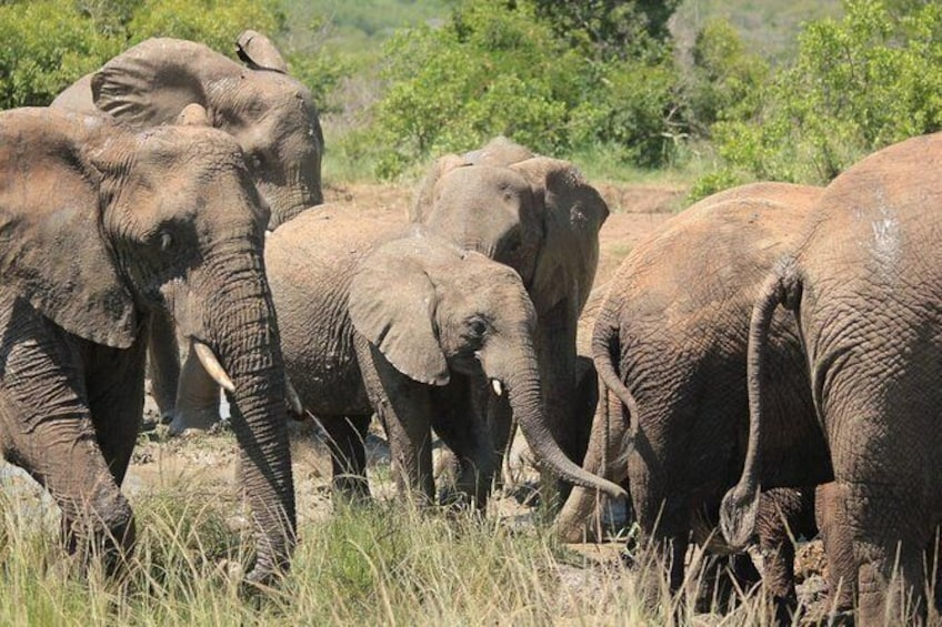 Show item 1 of 2. Hluhluwe-Imfolozi Game Reserve Guided Day Tour from Durban