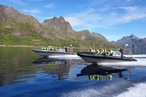 Trollfjord & Sea Eagle Safari