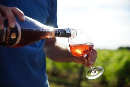 Discover local wines