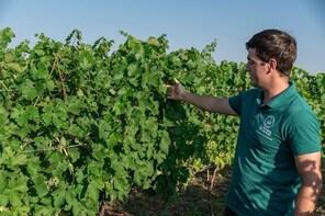 Vineyards tour & wine tasting near Varna