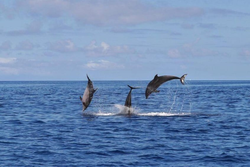 Whale Watching in the Azores, Terceira Island | OceanEmotion