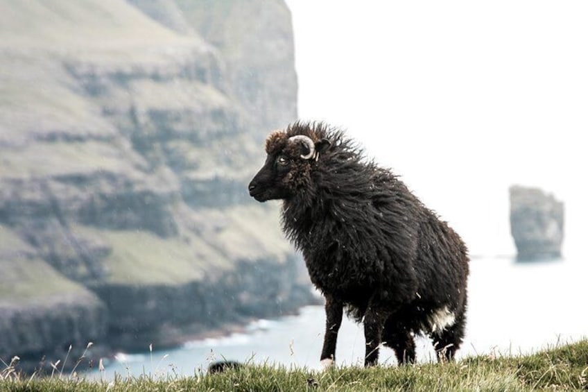 Show item 5 of 10. Highlights of the Faroe Islands   Private Experience