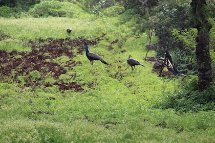 Farm Stay Experience in Panchgani
