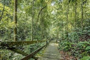 Nature Excursion in Borneo Tropical Rainforest Resort