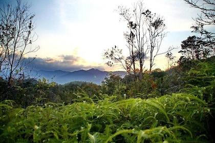 Lambir Hills Nature Excursion & Trekking