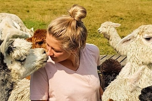 Alpaca Experience - trek around our farm then meet the alpacas