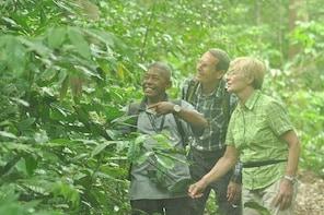 Rainforest Jungle Trekking