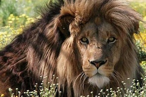 Full-Day Big Cat Sanctuary and Wine Tasting from Cape Town