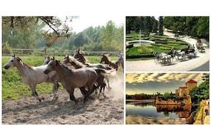 Stud farm visit to Babolna and Tata town private tour