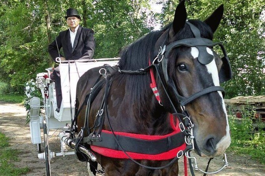 Show item 4 of 4. Mississippi Grand Carriage Ride (60 minutes)
