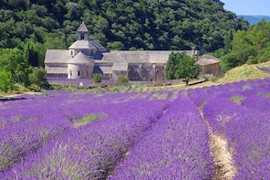 Small Group Provence and Lavender Museum Day Trip from Avignon