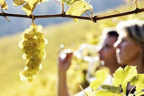 Rhone Valley Wine Tour with Chateauneuf-du-Pape & Tavel from Avignon